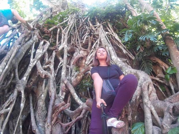 Oldest Rubber Tree in Asia