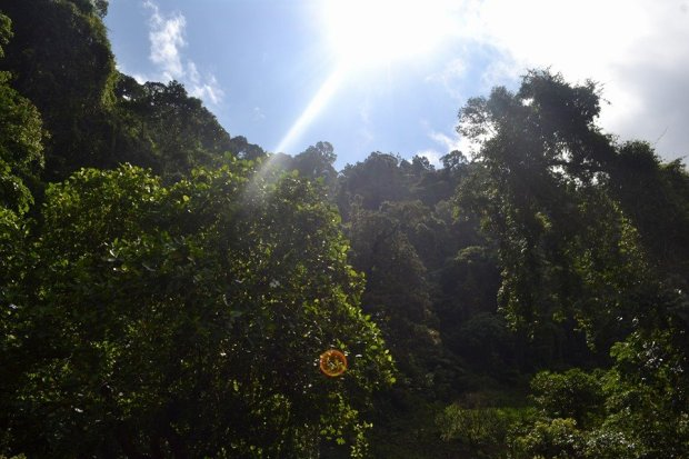 The Sun, The Forest and The Greens
