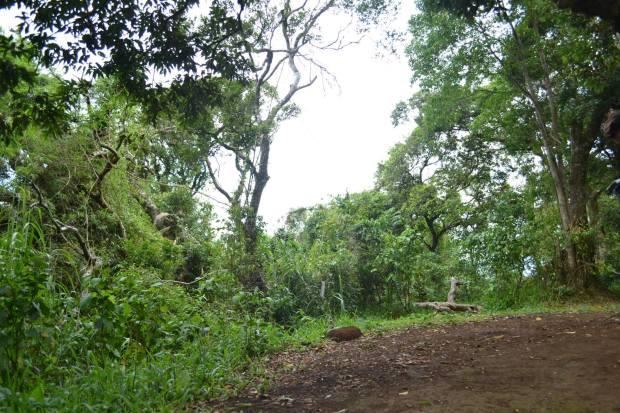 Camp Site in South Peak